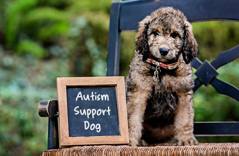 Autism Support Dogs: