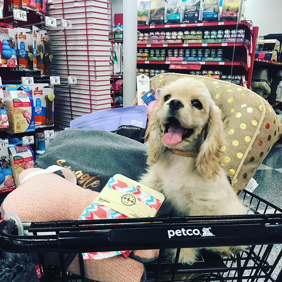 img- Chic Ways to Store Dog Treats