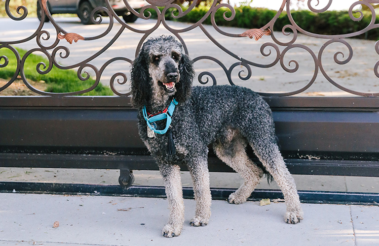 Asian Strain of Canine Distemper: