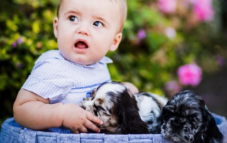 PUPPY BITES: HOW TO STOP IT FROM GETTING OUT OF HAND