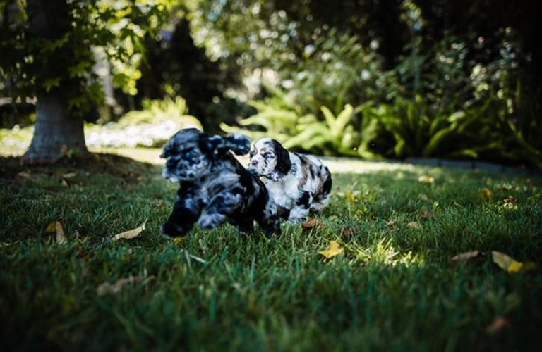 5 Activities Your Dog Will Love This Summer: